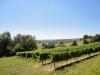 382uitzicht-over-wijnvelden