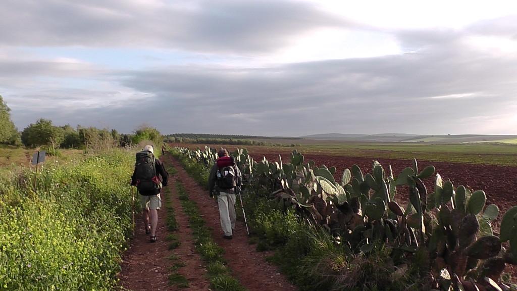 mooie cactusberm